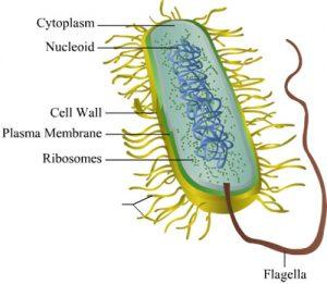 Bacteria-g