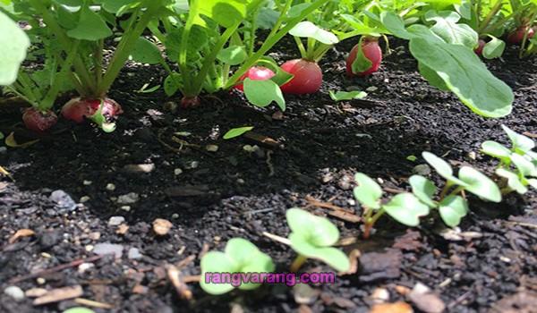 زمان کاشت سبزی خوردن