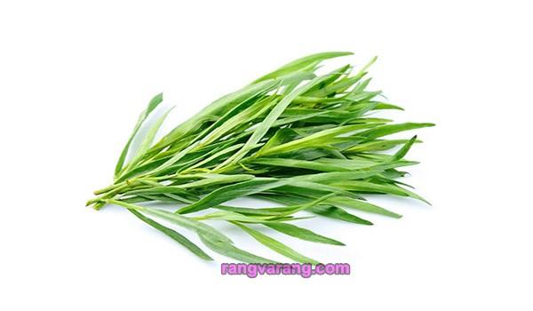 زمان کاشت سبزی خوردن - ترخون