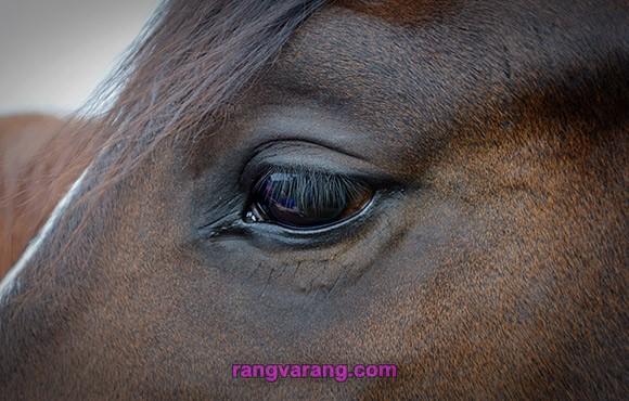 درباره دانستنی های اسب
