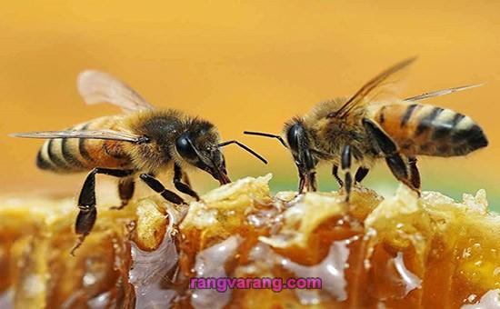 درباره زنبور عسل
