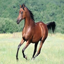 دانستنی های اسب