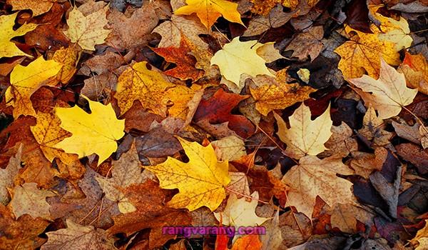 روش تهیه خاک برگ با برگ های پاییزی