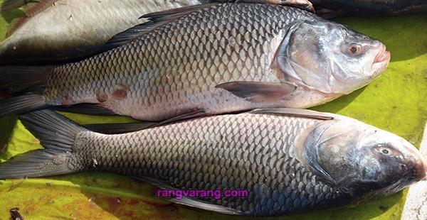 منجمد کردن انواع گوشت و نگهداری ماهی در فریزر