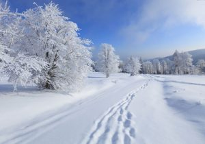 برف-زمستانی