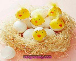 تخم مرغ رنگی جوجه ای