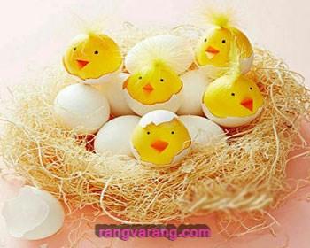 تخم مرغ های رنگی جوجه ای