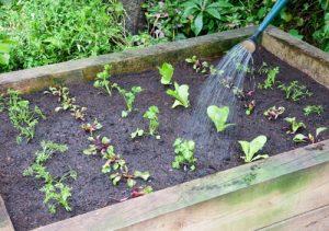 سبزی-کاری-در-خانه