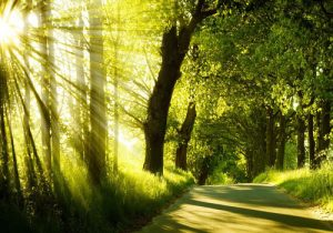 طبیعت-زیبا