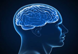 مغز-انسان