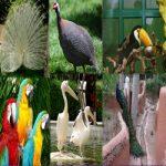 Isfahan Birds Garden