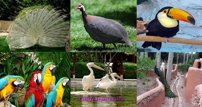 پرندگان باغ پرندگان اصفهان