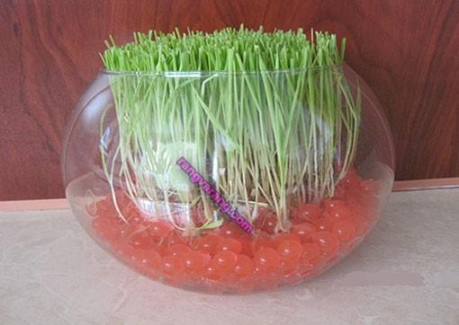 روش کاشت سبزه-با-خاک-ژله-ای-