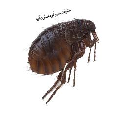 حشرات مضر