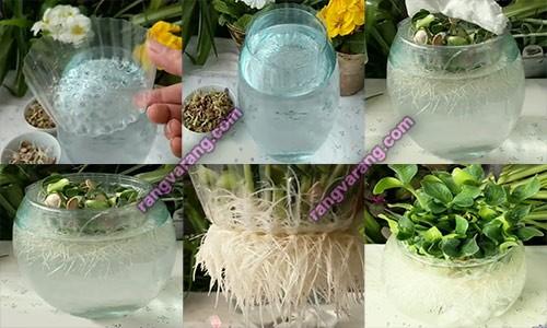 مراحل کاشت سبزه کدو در آب