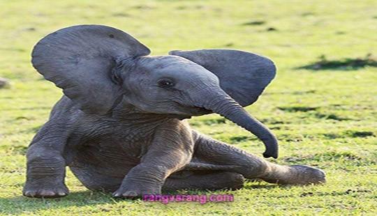 درباره فیل  و بچه فیل