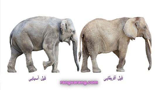 تفاوت فیل آفریقایی و آسیایی