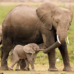 دانستنی های فیل