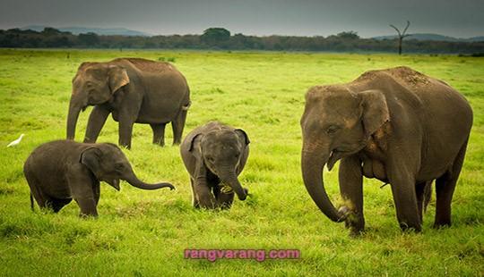 دانستنی درباره فیل ها