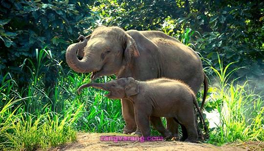 درباره فیل ها