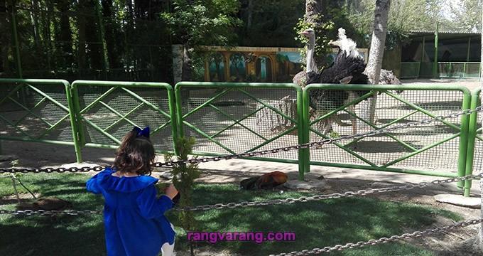 شتر مرغ باغ پرندگان