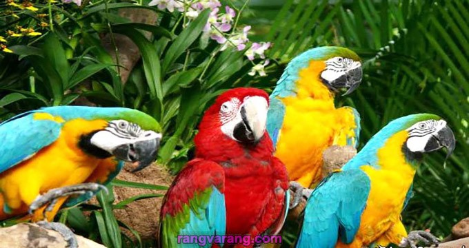 طوطی باغ پرندگان