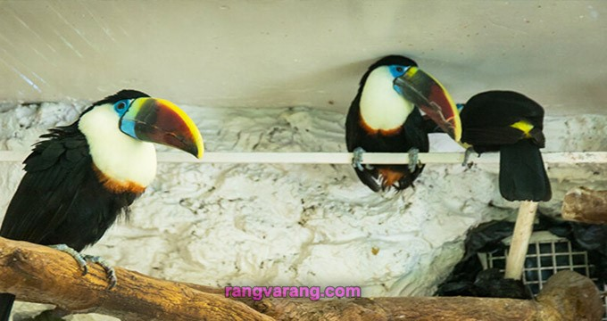 باغ پرندگان در اصفهان