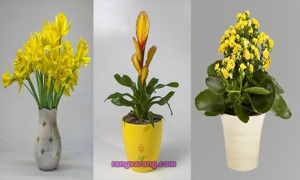 گل و گلدان به رنگ سال 2021